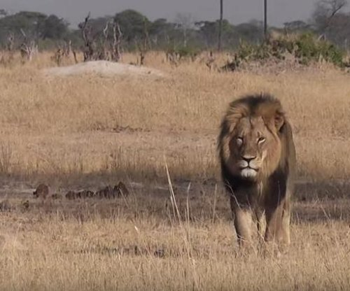 Zimbabwe lifts hunting ban imposed after Cecil the lion's killing