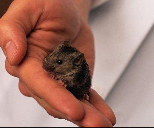 Skin patch to shrink 'love handles' works on mice