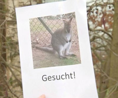 Escaped kangaroo eludes capture in German village
