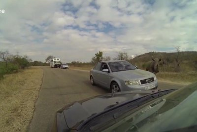 Aggressive rhino's charge at car caught on camera