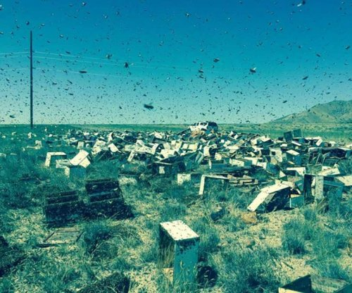 Firefighters forced to kill 20 million bees escaped from truck crash