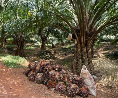 Oil palm plantations threaten protected Malaysian forests in unexpected ways