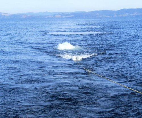 Seismic surveys responsible for high zooplankton mortality rates