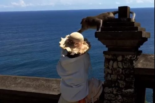 Monkey snatches selfie-snapping tourist's cellphone