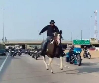 Watch: Cowboy arrested for riding horse onto busy Chicago highway