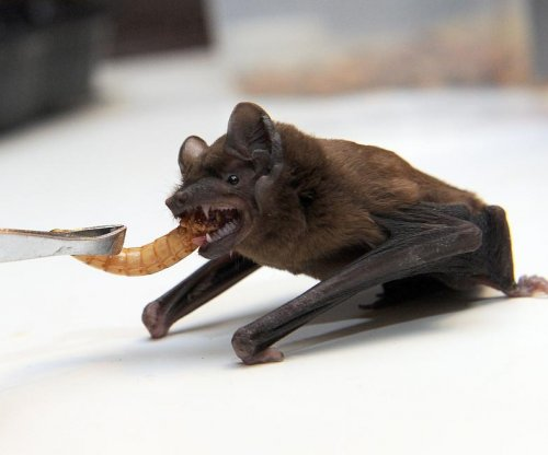 Study: Recovery of Caribbean bats would take 8 million years