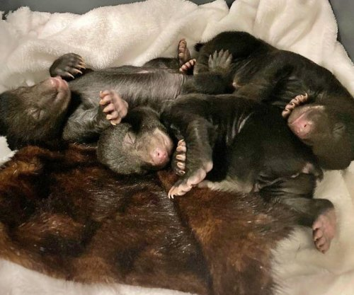 Gas leak leads to discovery of bear family sleeping under Tennessee home