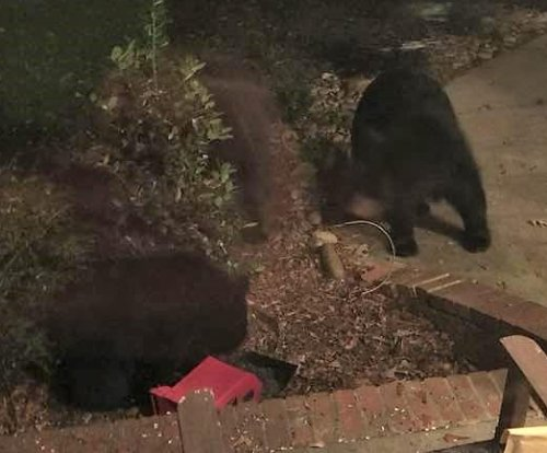 South Carolina woman finds five bears on her porch