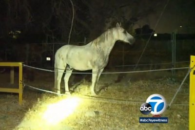 Police seek owners of loose horses wandering in Los Angeles