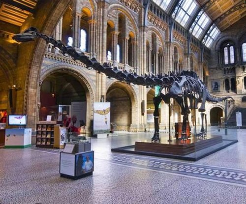 Dippy the dinosaur is being replaced by a blue whale