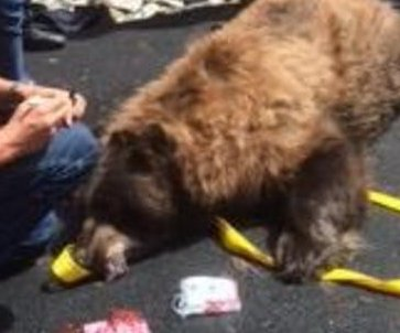 Police help remove 300-pound bear from under homeowner's deck