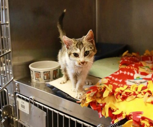 Kitten nicknamed 'Elsa' rescued, found frozen to blanket