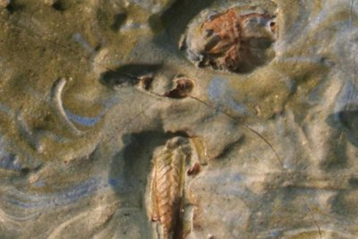Missouri museum finds grasshopper in 128-year-old van Gogh painting
