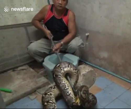 Snake catchers pull 20-foot python out of family's toilet