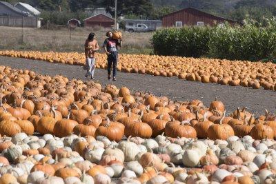 UPI News Quiz: a new 'Dune,' plentiful pumpkins, a tennis tantrum