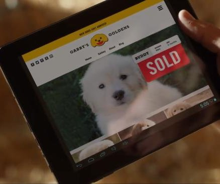 GoDaddy pulls puppy Super Bowl ad over animal rights complaints