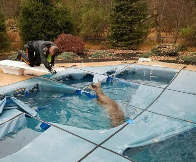 Drowning deer rescued after falling through pool cover