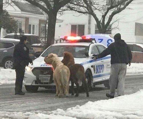 Pair of ponies ran wild on snowy New York streets