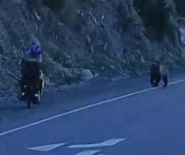 Cyclist chased by huge grizzly bear on Canadian highway