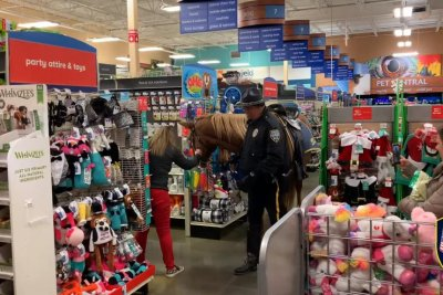 Police horse delights shoppers inside PetSmart store