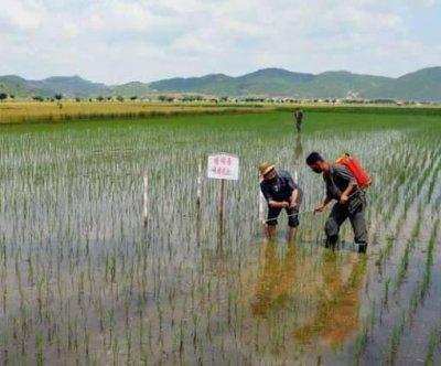 North Korea asks for 'sacrifices' as coronavirus concerns rise