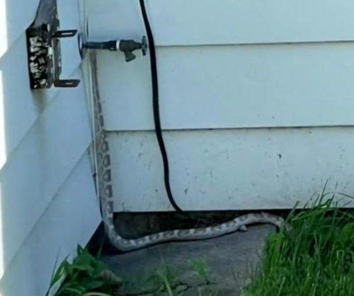 White snake on the loose in Manitoba neighborhood