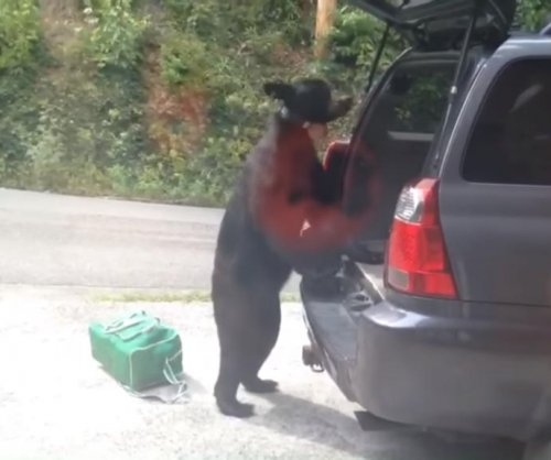 Bear rifles through open rear compartment of SUV in Tennessee