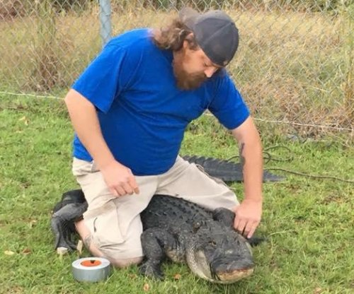Alligator captured at elementary school during morning drop-off