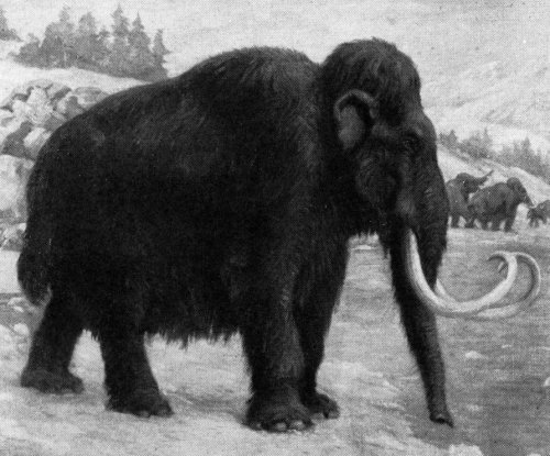 Researchers resurrect mutated genes of one of the last wooly mammoths