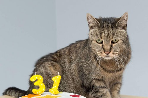 World's oldest cat, Nutmeg, dies at 32