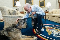 Bidens announce 'cherished' German shepherd Champ has died