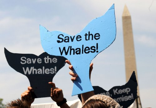 New Zealand to defer on Japan whaling case