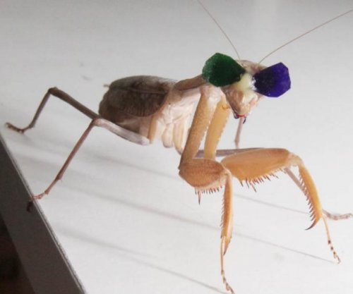Tiny glasses test, confirm praying mantis' 3D vision