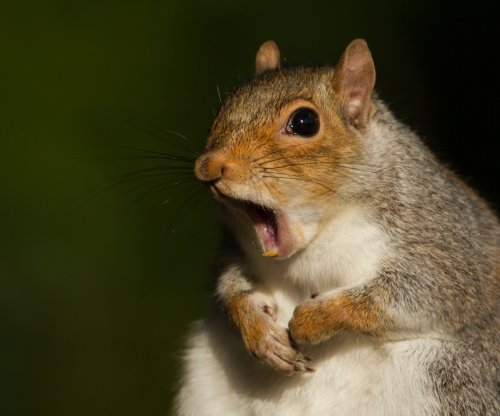 Squirrel left thousands without power in Tulsa