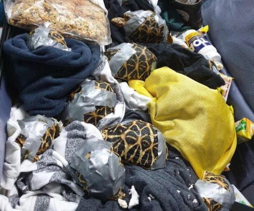More than 1,500 turtles, tortoises found in luggage