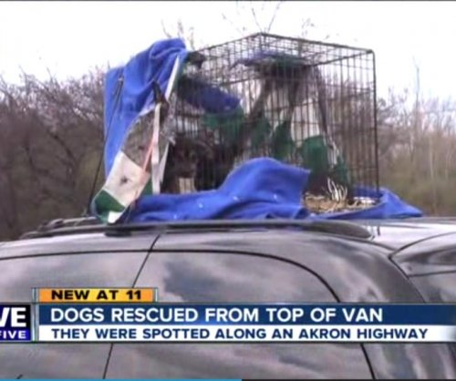 Puppies rescued from roof of van speeding on Ohio highway