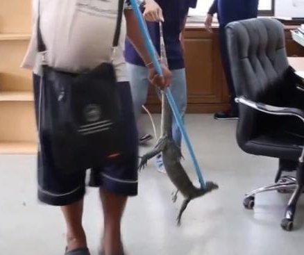 Monitor lizard falls through office ceiling, lands on worker's desk