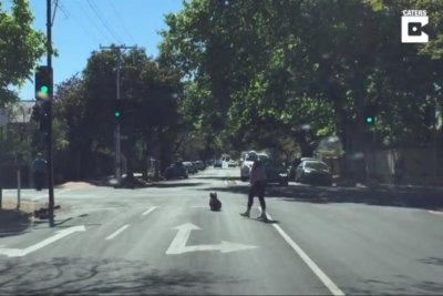 Wandering koala blocks road in Australian city