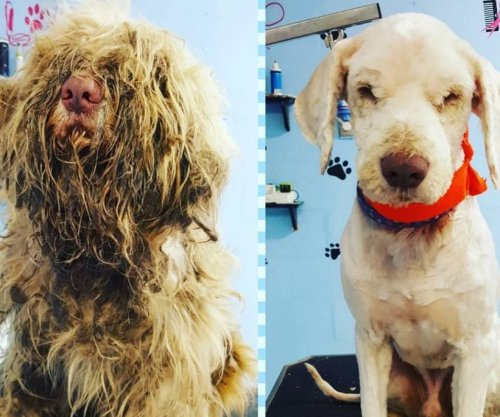 Dog with severe fur mats gets emergency midnight grooming