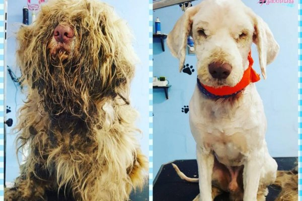 Watch Dog S Fur Mats Prevented Him From Walking Using