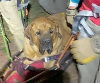 Rescuers carry exhausted 190-pound dog down mountain trail
