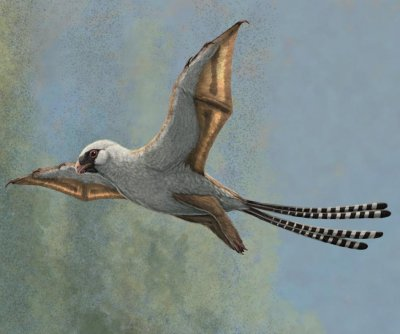 Two bird-sized dinosaurs could glide, but time in the skies was short-lived