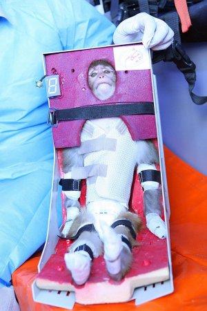 Iran monkey in space 'masks missile plan'