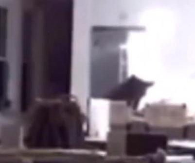 Bear breaks into California home, raids fridge