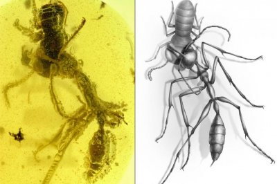 Amber fossil reveals hunting prowess of ancient 'hell ant'