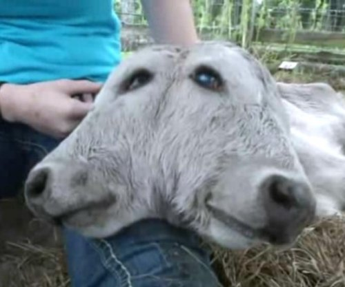 Two-headed calf born at Florida farm