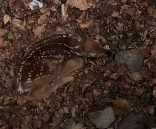 Montana firefighters rescue baby deer from window well