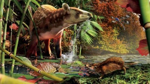 Canadian fossil reveals world's smallest hedgehog