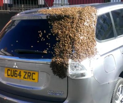 SUV covered in bees keeps Welsh town abuzz for hours