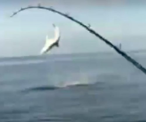 Florida fishermen film shark jumping out of water